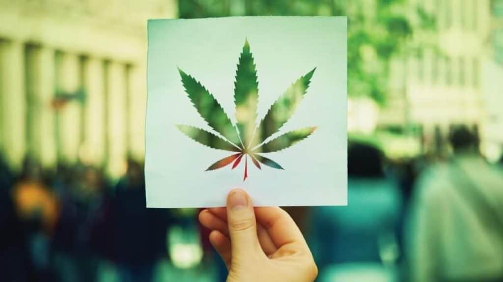 cannabis fleur cbd france