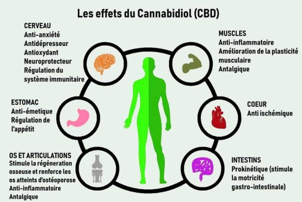 effets du CBD cannabidiol