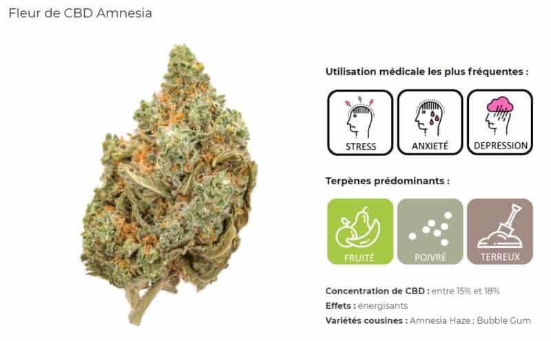 fleur CBD Amnesia