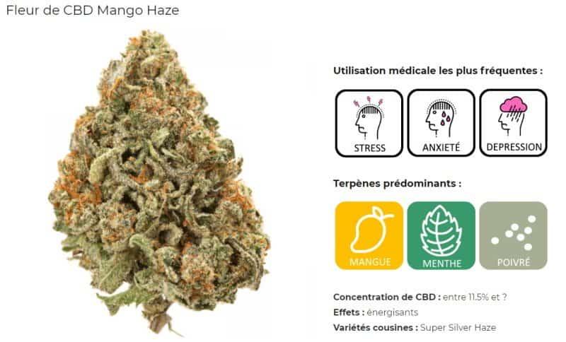 fleur CBD Mango Haze